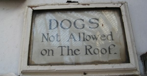 no-dogs-on-roof_2